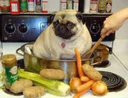 en chine on mange du chien depuis des millénaires michelduchaine