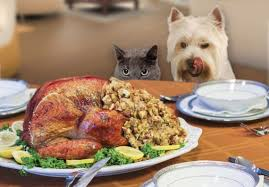 9 safety tips to avoid a ruff thanksgiving for your pets live
