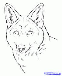drawn coyote pencil and in color drawn coyote