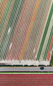 Netherlands Tulip Fields 94 Best Tulips Fields Images On Pinterest Tulip Fields Flowers