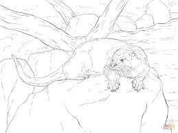 river otter coloring page free printable coloring pages