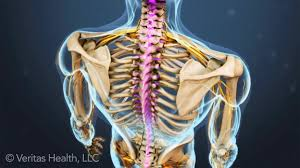 Back Pain When Getting Out Of Chair Is Poor Posture Causing Your Back Pain