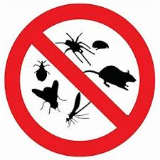 Bed Bugs New York City Joe Blue Pest Control Ants Bed Bugs Events Mice Rats Roaches