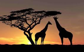 safari special safaris zanziplanet