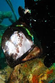 diving in pulau mabul