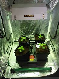 crop master hydroponics the basics of growing