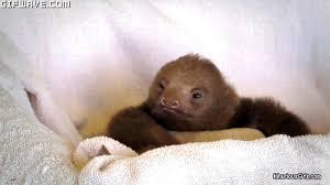 Sloth Meme Generator - sloth meme generator gif 9851 funny sloth gifs funny gifs