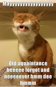 Singing Meme - lolcats singing lol at funny cat memes funny cat pictures with
