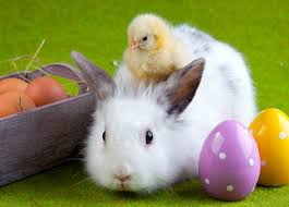 bunny easter 5 reasons you should not give your kids real bunnies
