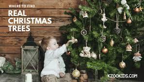 real christmas tree where to find a real christmas tree around kalamazoo 2017 kzookids