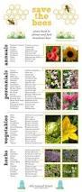Hummingbird Plant A Handy List Of Plants That Attract Pollinators Butterflies