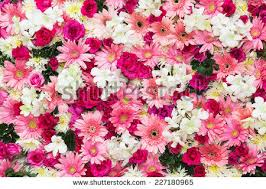 Images Of Pretty Flowers - flower background stock images royalty free images u0026 vectors