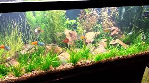Aquarium Aquascapes Aquascaping A Planted Aquarium Can Be Difficult 75 Gallon Planted