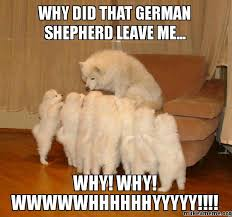 Funny German Shepherd Memes - why did that german shepherd leave me why why