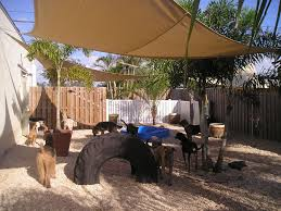 cool play yard set up for dogs this is doable and great for when
