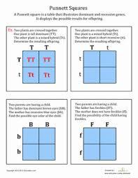 punnett square practice worksheet middle free worksheets