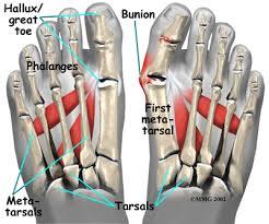 Foot Tendons Anatomy A Guide To Hallux Valgus Bunions Houston Methodist