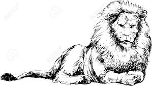 hand drawn lion royalty free cliparts vectors stock