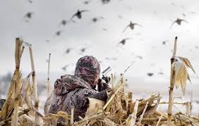 Underground Duck Blind Rifle Woods Deer A Hunting Lesson For The Novice Social Matter