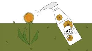 how to get rid of dandelions in a lawn 12 steps with pictures