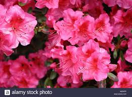flower delivery near me flowers near me flower delivery stock photo 122661162 alamy