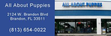 all about puppies store puppies for sale in ta bay area