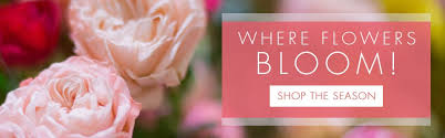 florist knoxville tn knoxville tn florist flower delivery
