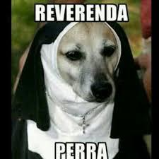 Memes De Halloween - reverenda perra memes perros pinterest funny pics and humor