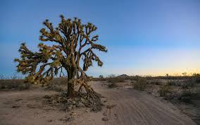 8 must do mojave desert adventures outdoor project