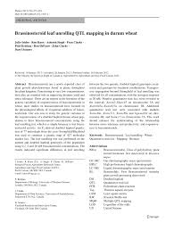 Qtl Mapping Brassinosteroid Leaf Unrolling Qtl Mapping In Durum Wheat Pdf