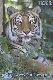 38 best big cat rescue tampa fl images on pinterest big cat
