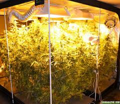 virtual sun grow light reviews 51 best grow tent homegrown hydroponics hydro home growroom tent 88