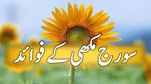 sunflower benefits in urdu suraj mukhi ke faide youtube