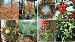 how to use native garden plants for christmas decorations