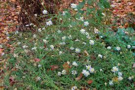 fleurs vivaces rustiques 3 jardins au québec 2014