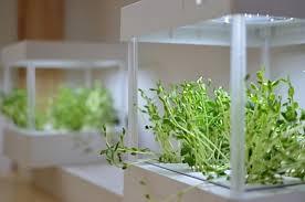 grow light indoor garden 10 easy pieces grow lights for indoor plants gardenista