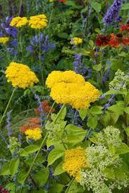 195 best perennial flowers images on pinterest flower gardening