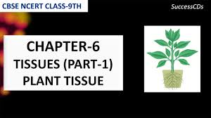 tissues biology class 9 ncert science plant tissues youtube