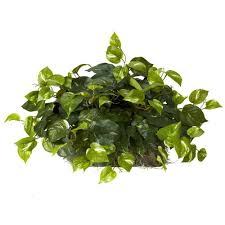 where to buy mistletoe 15 in h green pothos ledge plant set on foam silk plant 6708