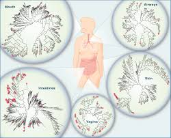 has the microbiota played a critical role in the evolution of the