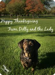 dolly s tips for a pet safe thanksgiving