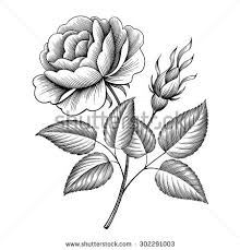 rose outline stock images royalty free images u0026 vectors