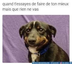 Sad Dog Meme - lol qu est ce que je dois faire 縲 propos qui suis je