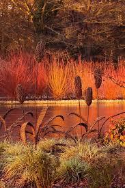 268 best grasses images on plants garden and garden ideas
