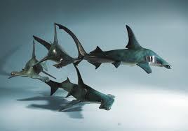 bronze hammerhead shark sculpture by marine wildlife artist