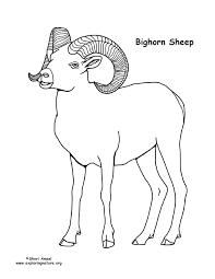 bighorn sheep coloring