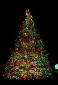 others and gold tree with colored lights