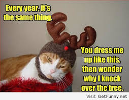 Christmas Cat Memes - cat costume for christmas funny pictures funny quotes funny