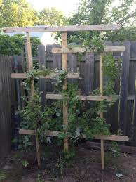 raspberry trellis great from when you don u0027t have enough space for