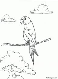 parrots bird printable coloring pages kids printable